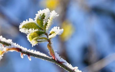 frost_snow_branches_beautiful_winter_seasonal_back_19.04.21