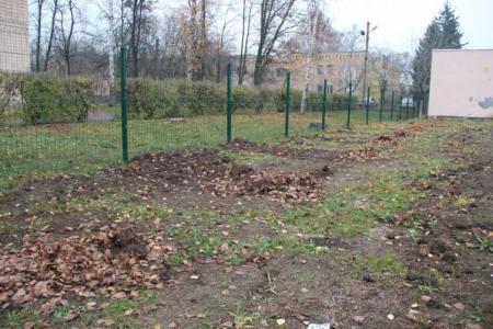 Вандалы за две ночи выкорчевали целую аллею туй со школьного двора в Полтавской области