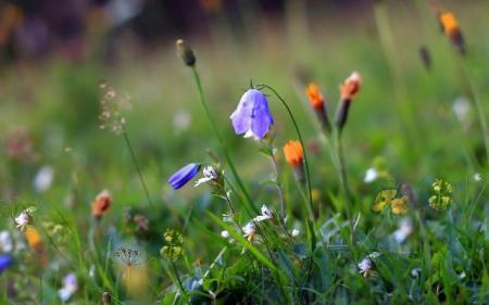 grass-flower-summer_13.08.20