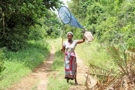 kenya_butterfly_farming_2