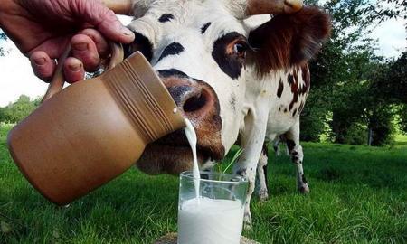 Про сливовицю і свіже молоко, без яких життя було би пріснішим