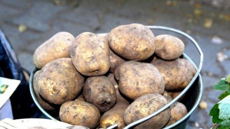 В Украину завезли ядовитый картофель