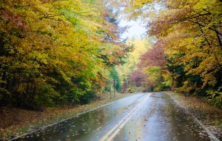 nature-autumn-fall-rain-road_21.09.21