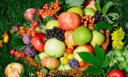 В Украине урожай фруктов и ягод может превысить прошлогодний на 30%