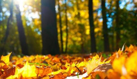 pogoda_solnce_6_15.10.19
