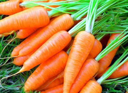 Что нужно знать про морковь
