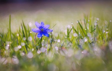 priroda-cvety-boke-kapli-7418_13.08.20