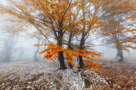 priroda-les-derevia-osen-listva-zima-sneg_25.11.19
