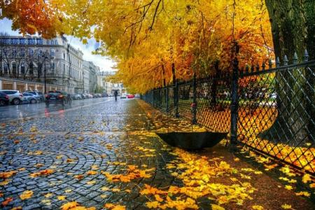 sankt-peterburg-ekaterininskii-park-osen-dozhd_17.11.19
