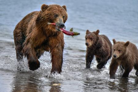 Голодные медведи заблокировали популярный туристический маршрут в России