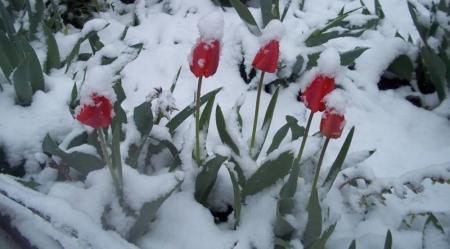 sneg-v-aprele-5-800x444_21.03.18