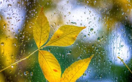 steklo-kapli-listya-dozhd-5946_24.09.20